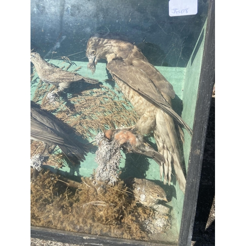 22 - Taxidermy large bird display [45x86x18cm] [Mould in areas]