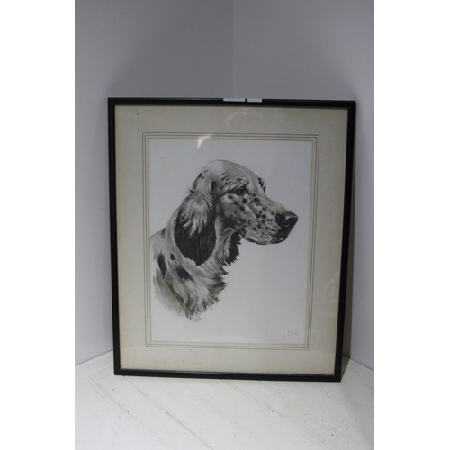 43 - PORTRAIT OF A SPANIEL  44CM X 52CM...