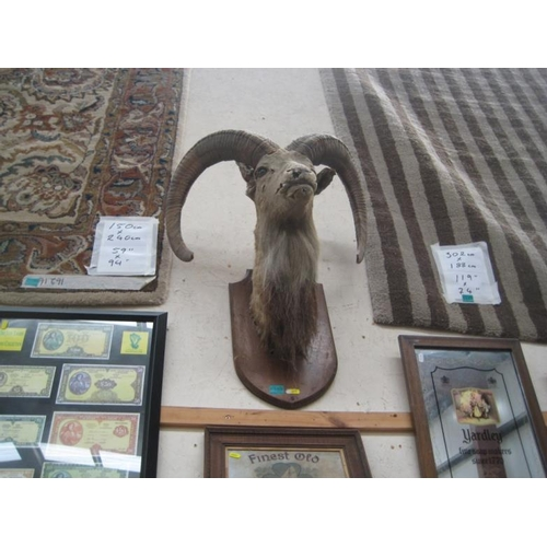 188 - Taxidermy of a Deer Head...