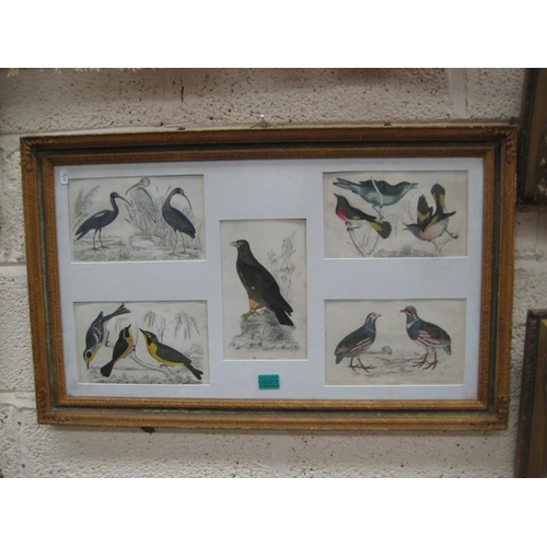 23 - Framed Collection of Hand Coloured Bird Prints from Goldsmith's Book circa 1850...