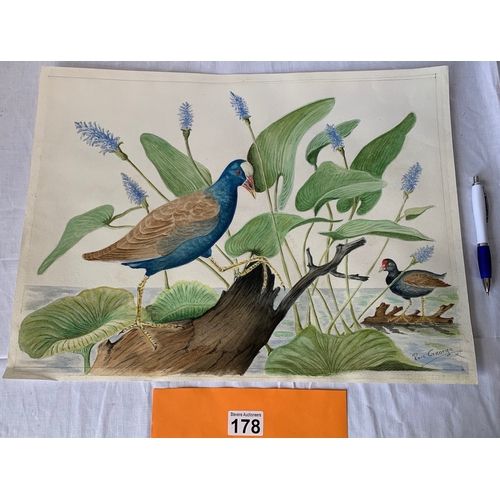 178 - Large unframed watercolour of Waterfowl (Ron George)