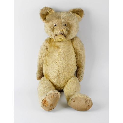 600 - A box containing an early gold plush teddy bear, with wide pricked ears, glass eyes and pointed snou...