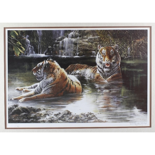 692 - A limited edition signed print signed Dorothea Buxton Hide, depicting two tigers bathing, 17 x 25 (4...