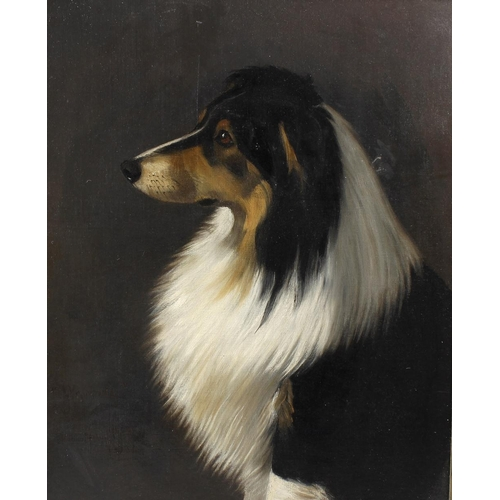 724 - Lucy Hill (early 20th century) oil painting on canvas, portrait study of the dog 'Waverly', indistin...