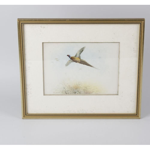 770 - Attributed to James Stinton (1870-1961)Four watercoloursEach depicting a bird in flight, three of ph...