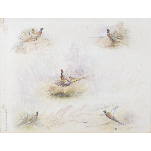 772 - James Stinton (1870-1961)Five watercolour studies on one sheetEach depicting one or two pheasants be...