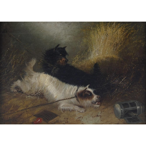 778 - Edward Armfield (1817-1896) oil on canvas, study of two terrier dogs closely observing a rat, signed...