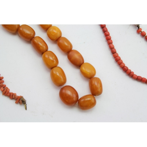95 - An Antique Turned Coral Necklace with a Gold Clasp along with an amber bead necklace.