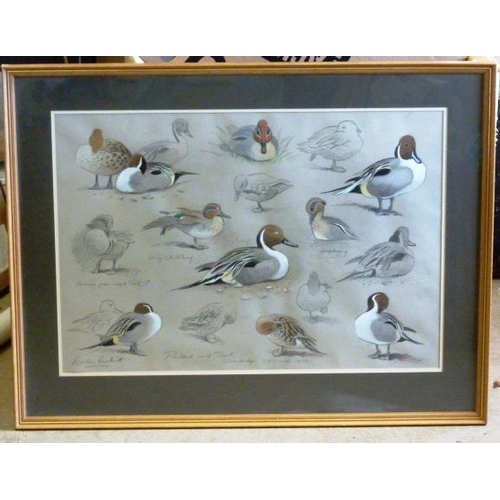 550 - * Robin Reckitt ''Pintail and Teal Sketches'', the Wildfowl Trust at Slimbridge, Pencil and Watercol...