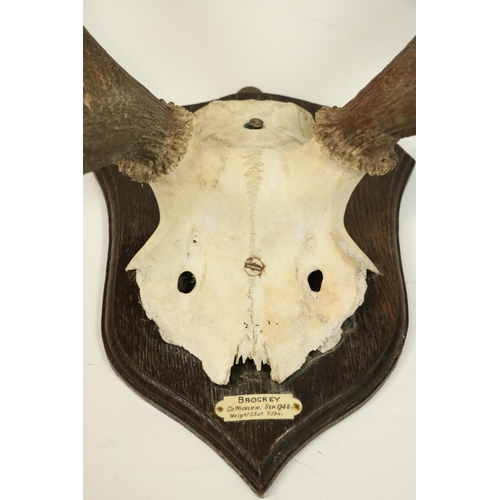 24 - <strong>A set of large Deer Antlers,</strong> with eleven points, mounted on oak shield plaque with ...