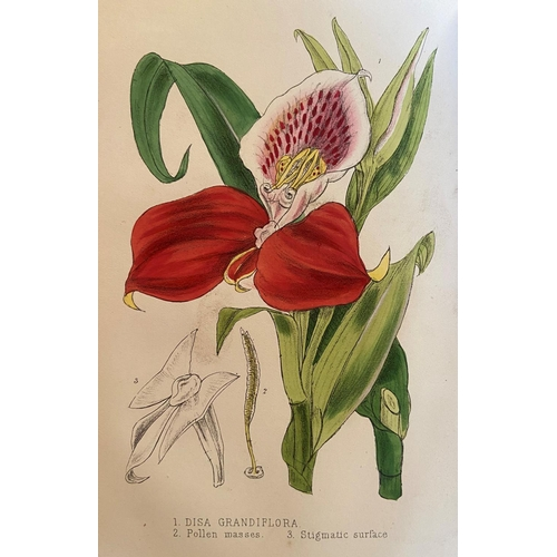 51 - With Fine Hand-Coloured PlatesBotanical:Williams (Benj. Sam.)The Orchid - Grower's Manual, 8vo L...