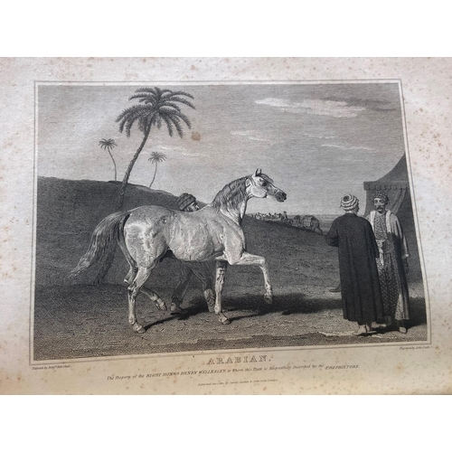 9 - Lawrence (John)The History and Delineation of the Horse, in all its Varieties, ... Character of the...