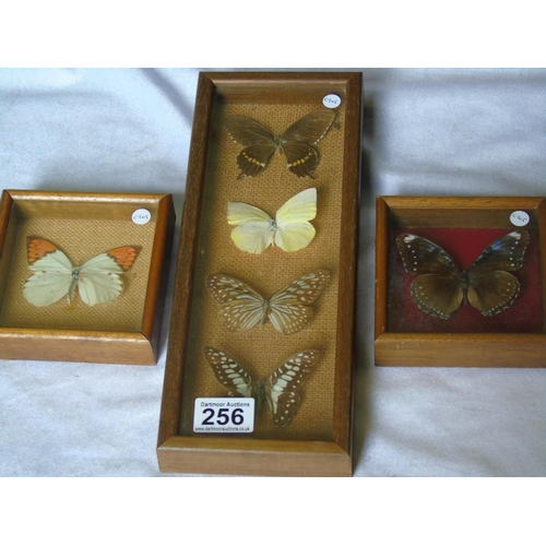 256 - Three boxes of butterflies...