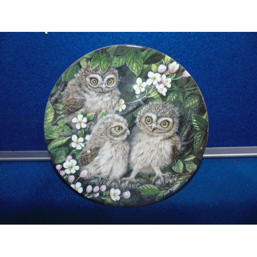 56 - A small wedgewood plate showing the baby owls...