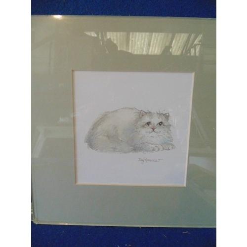 253 - Framed illustrative print of cat by Judy Rossouw...