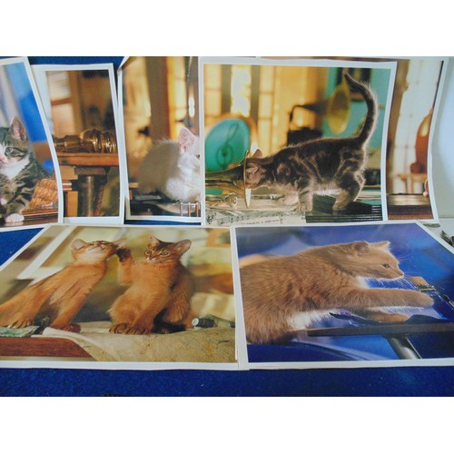 288 - Various cat prints...