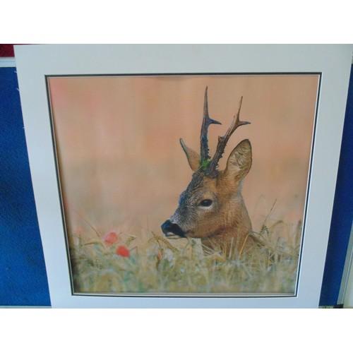302 - Framed deer print...