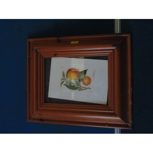 395 - Small framed print of oranges...