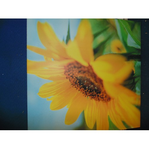 486 - Sunflower print on canvas...