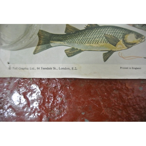 34 - A large unframed fish chart...