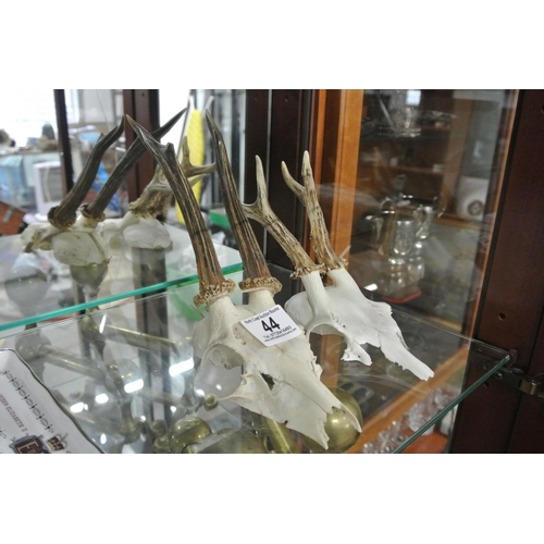 44 - A small pair of partial deer skulls with horns....
