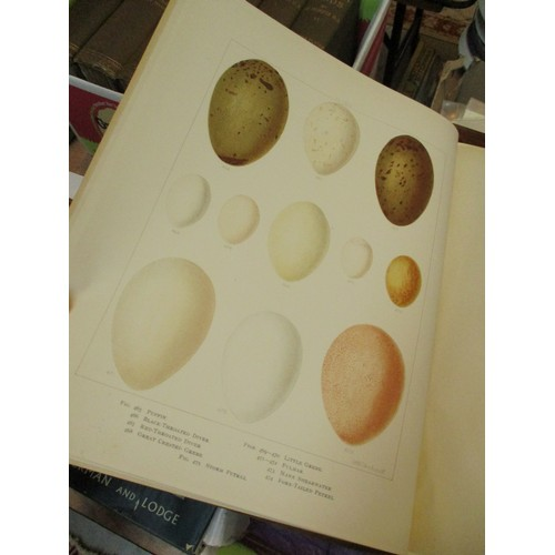 6 - Six Books - British Birds and Their Nests and Eggs