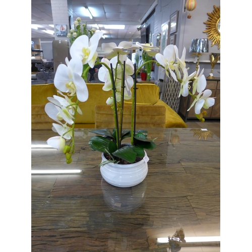 1302 - A triple white phalaenopsis orchid in a white ribbed bowl (54841318)   #...