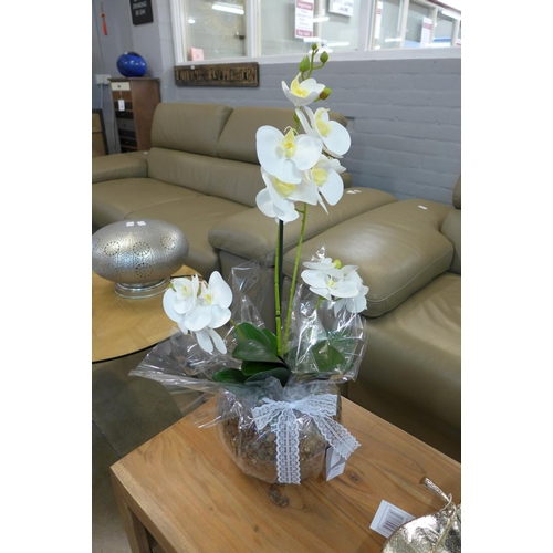1344 - A white phalaenopsis orchid in a glass bowl (54841014)   #...