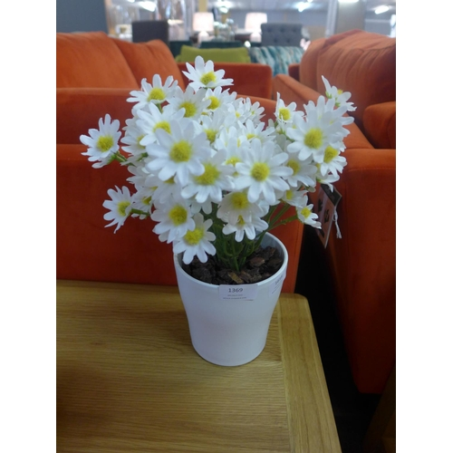 1369 - A potted summer daisy (54841807)   #...