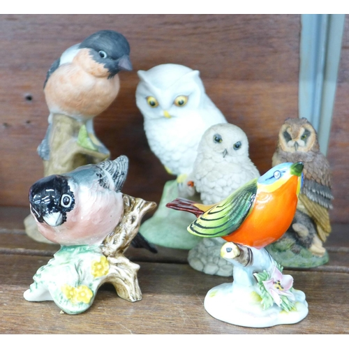 637 - Six bird figures including Beswick, Royal Adderley and Royal Doulton...