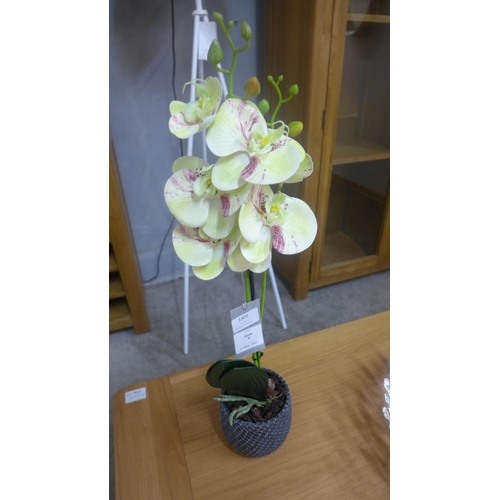 1404 - Two moth orchid stems (5423806)   #...