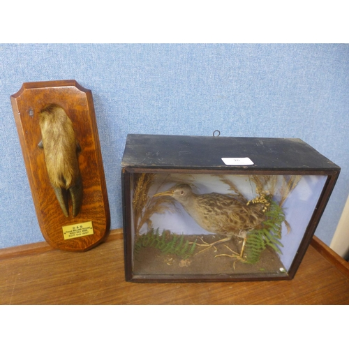 26 - Taxidermy, an early 20th century cased female water rail and one other...
