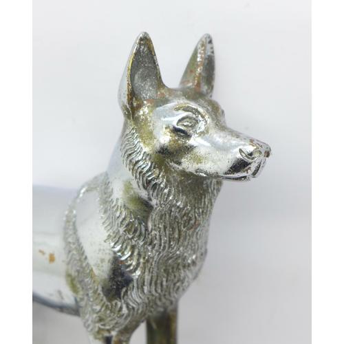 627 - An A.G. Ward chrome car mascot, German Shepherd...