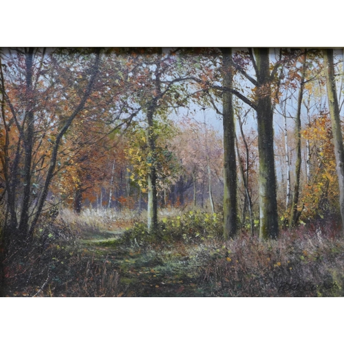 13 - Peter Barker (b.1954), Autumn, Southwick Wood and Sunlight, Wakerley Wood, 9cms x 12cms, oil on boar...