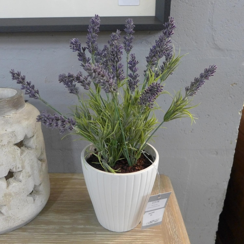 1470 - A potted Lavender in a ribbed pot, 36cms (50745406)   #...