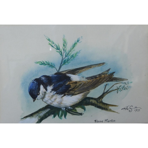 46 - Terry Sills, House Martin, watercolour, 12 x 17.5cms, framed...