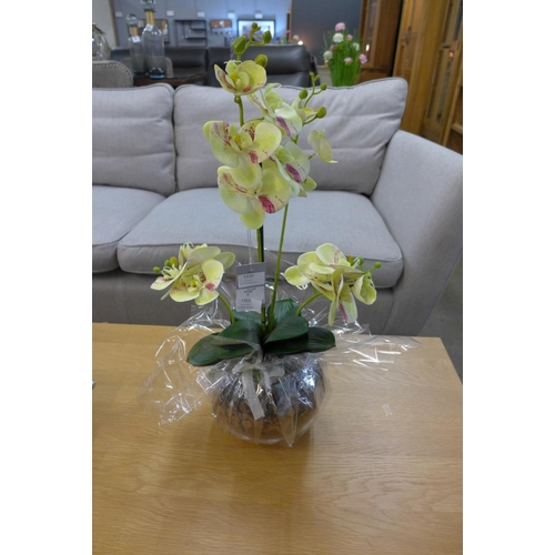 1506 - An orchid arrangement in a gift wrapped bowl, 58cms (54241014)   #