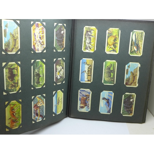 654 - An album of cigarette cards and a box of Marcovitch cigarettes