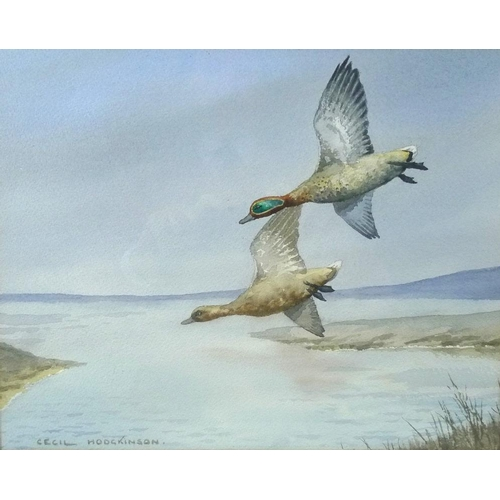 556 - Cecil Thomas Hodgkinson (Lincolnshire, 1895-1979): 'Teal Pitching', watercolour of fowl in flight, w...