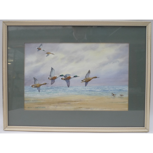 101 - Cecil Thomas Hodgkinson (1895-1979): marine watercolour of Shoveller ducks in flight over three Dunl...