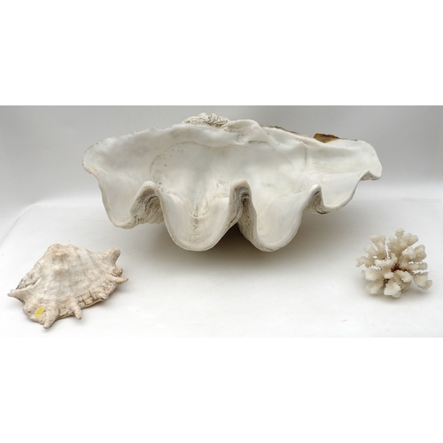 125 - A large 20th century plastic replica of a Giant Clam shell, together with a piece of white coral and...