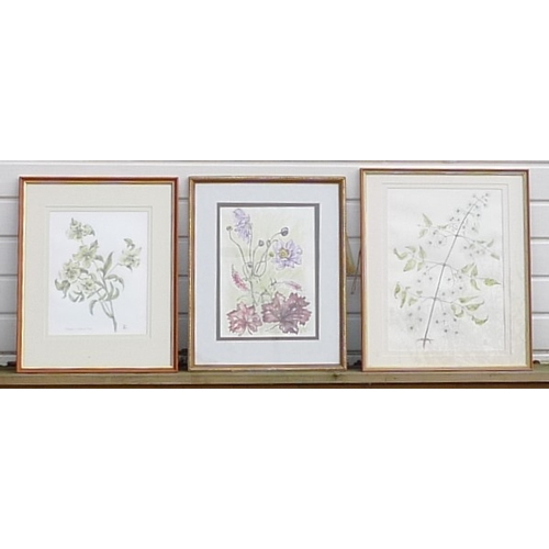 187 - Daphne Webb (British, b. 1929): a collection of three botanical studies, including a watercolour of ...