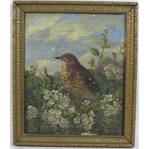 199 - F. P. Wright (British, late 19th century): two avian studies, each signed lower right, one dated 188...