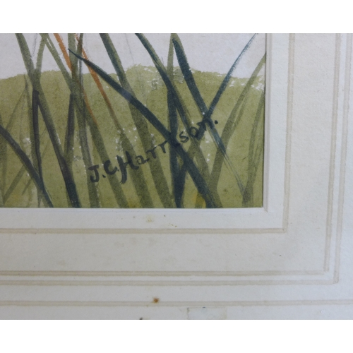 251 - JC Harrison / John Cyril Harrison (British, 1898-1985): 'Snipe dropping to alight', signed lower rig...