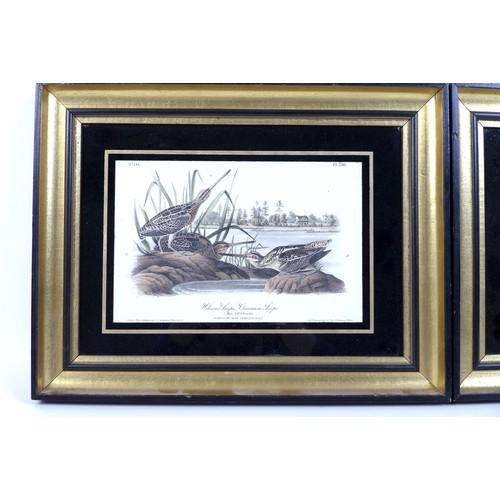 144 - After J. J. Audubon (French, 1785-1851): two J. T. Bowen ornithological colour lithographs, 'Wilson'...