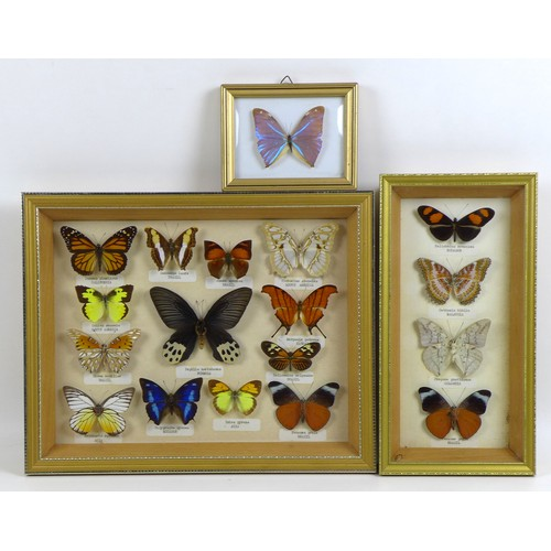 108 - A group of three glazed cases containing mounted taxidermy butterflies, mostly South American specie...