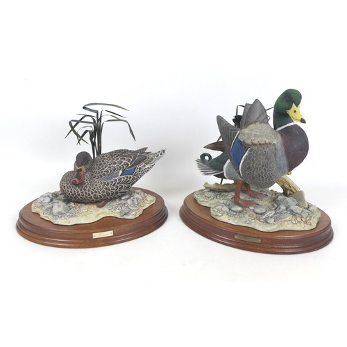 20 - Two limited Border Fine Arts model ducks 'Leonardo' with certificate numbered  '176/350', model only...