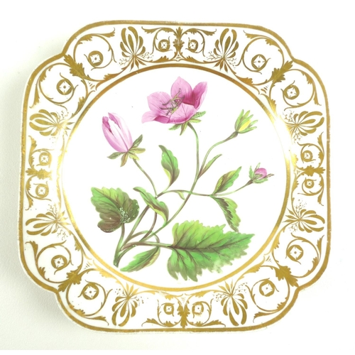19 - A set of six early 19th century English porcelain botanical dishes, possibly Coalport or Minton, eac...