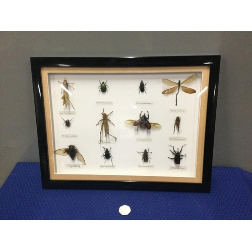 39 - Framed insect collection...