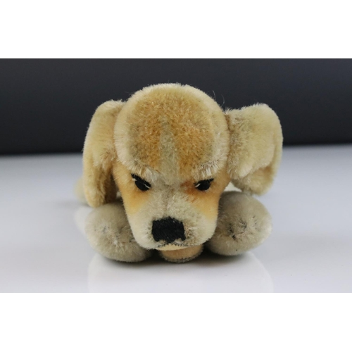 22 - A vintage Steiff Beagle puppy, with stud and tag to ear.